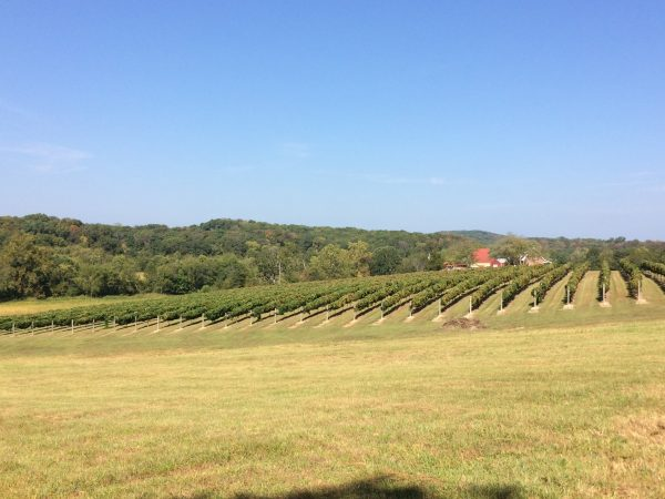 Sandy Ridge Vineyard
