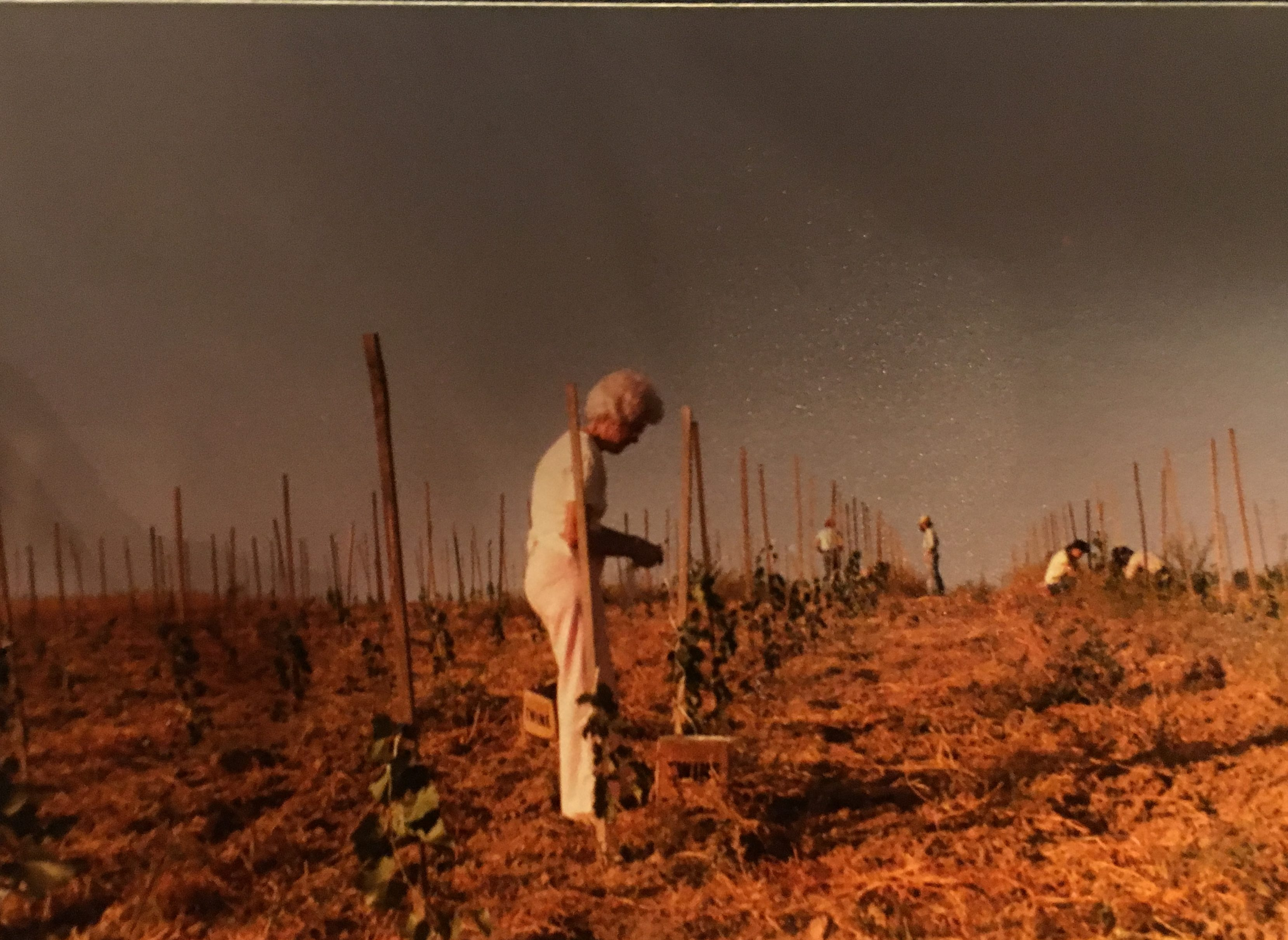 Tending to Vines